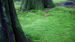 クマムシ(虫)は最強生物!生態は?生息地と採集の仕方と寿命も解説!