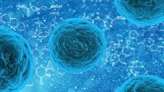 Tレグ細胞を増やす方法と食べ物について!アレルギーやアトピーへの効果も紹介!