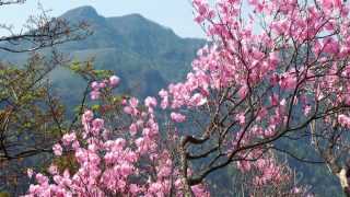 諸塚山の山開きはいつ?登山口もチェック!渓流の里とアケボノツツジの開花情報も紹介!