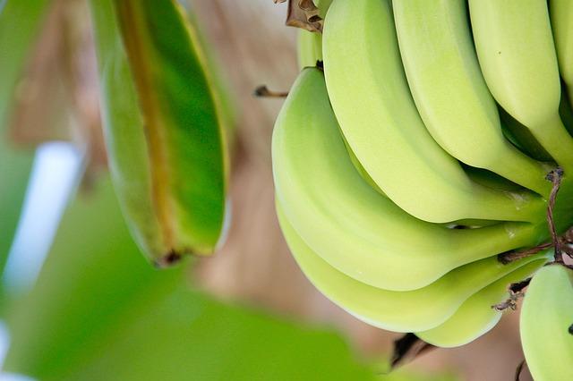 青色のバナナ