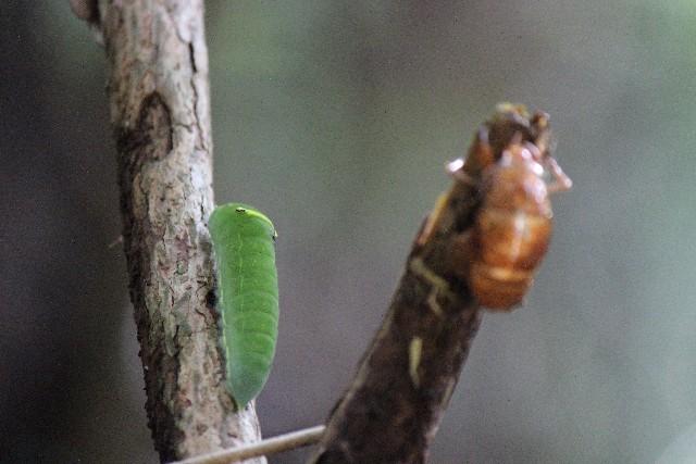 青虫と昆虫