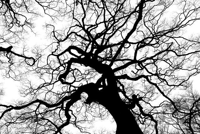 tree-894903_640