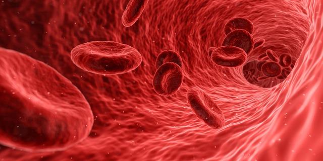 ゴースト血管とは?復活や改善方法をリサーチ!チェックの仕方も解説!